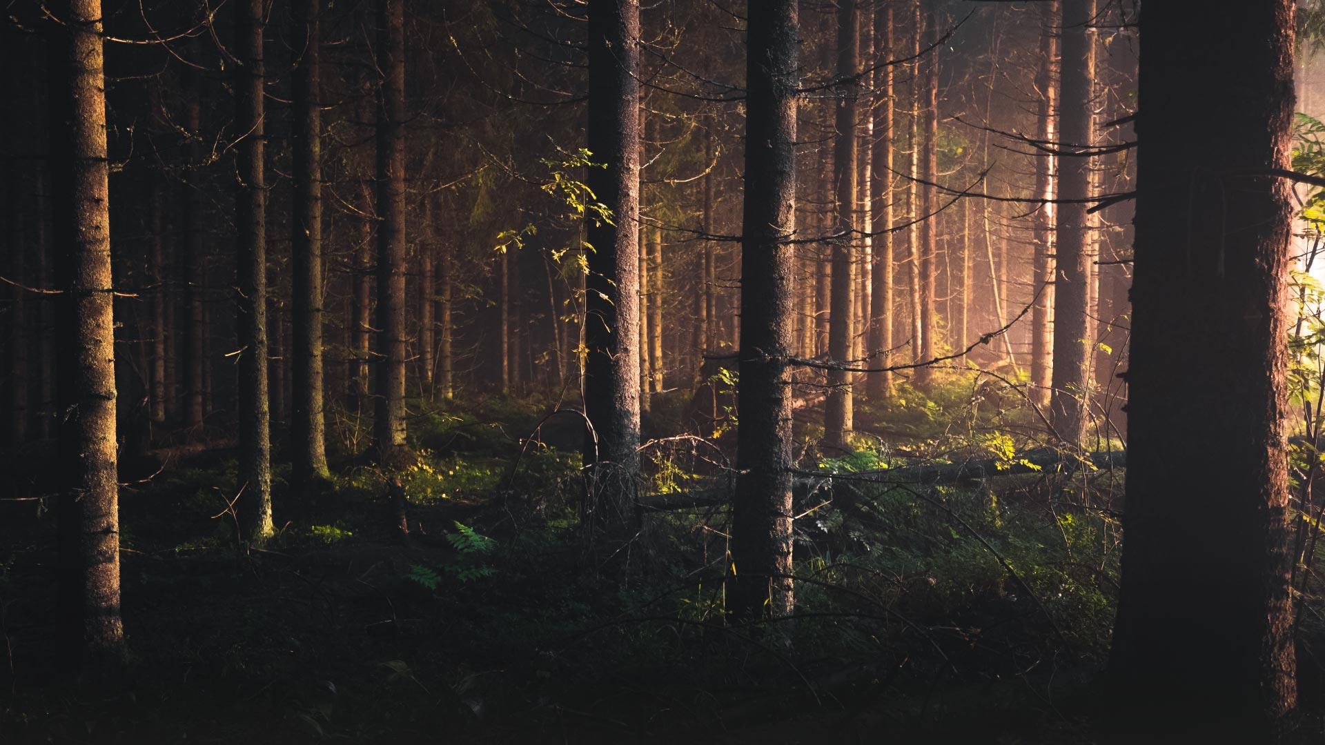 un forêt au printemps