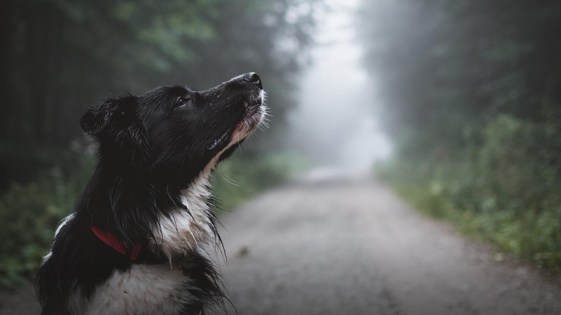 chien sur une route