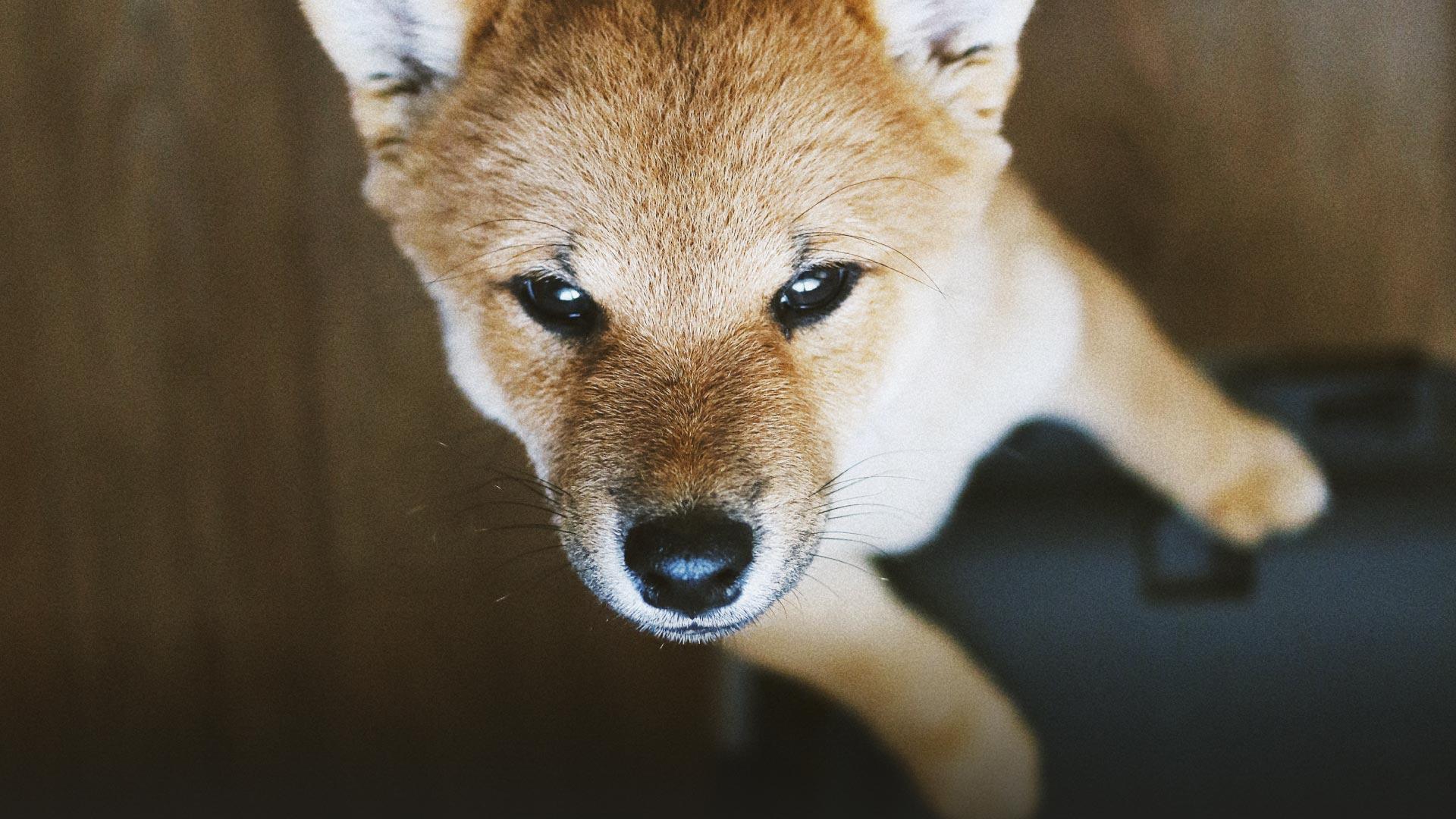 chien application de balades